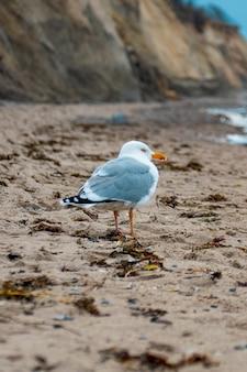 Möwe, die am strand auf dem sand spazieren geht