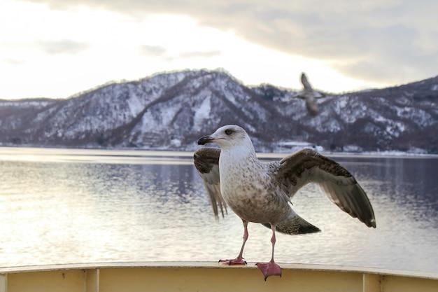 Möwe, die auf einem handlauf des kreuzfahrtschiffes in hokkaido und blick auf berg im winter sitzt