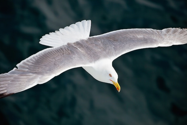 Möwe, die über das meer fliegt