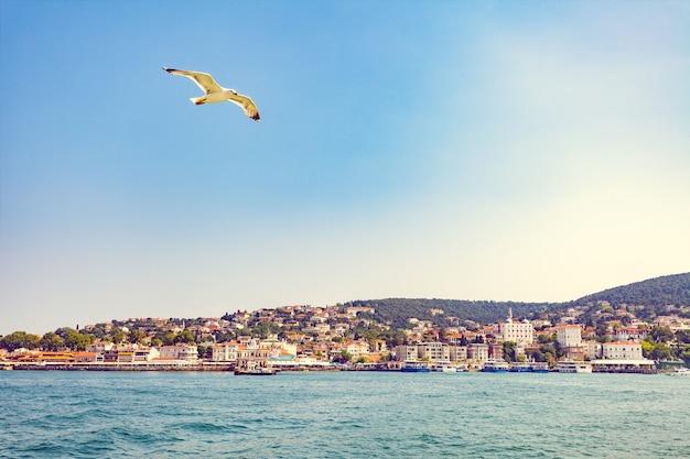 Möwe, die über moderne gebäude und strand mit klippen im dorf kas, türkei fliegt