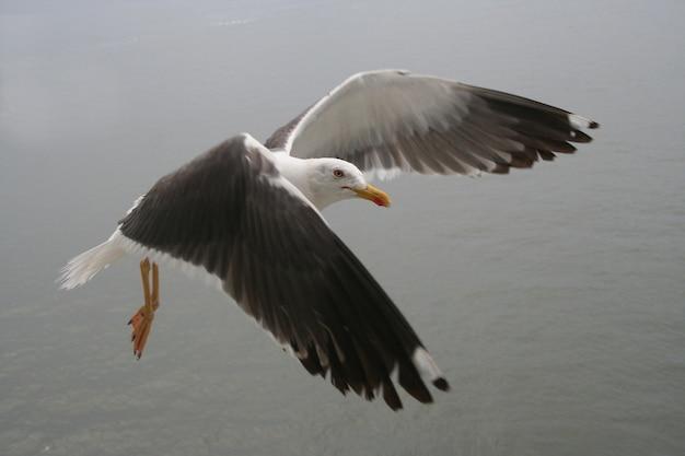 Möwe fliegen