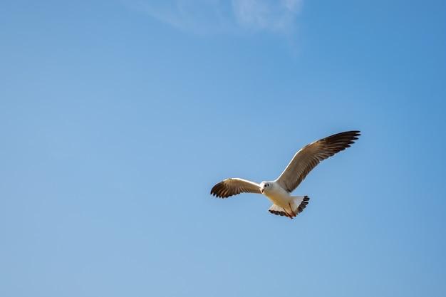 Möwe fliegt auf dem meer in thailand