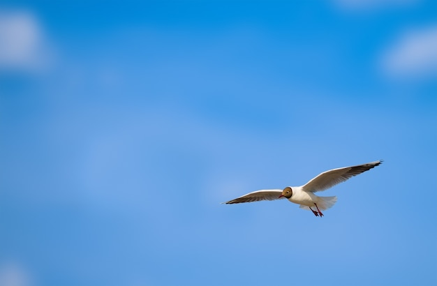Möwe fliegt gegen einen sommerblauen himmel