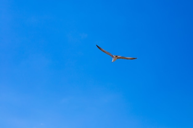 Möwe fliegt in den blauen himmel