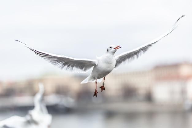 Möwe fliegt mit flügeln in der städtischen umgebung.