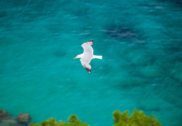 Möwe fliegt über meer