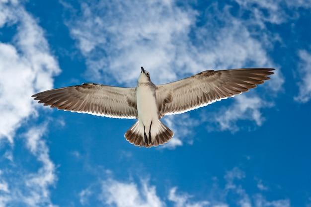 Möwe fliegt