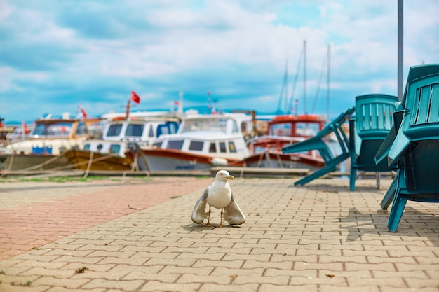 Möwe geht am ufer der stadt in istanbul entlang