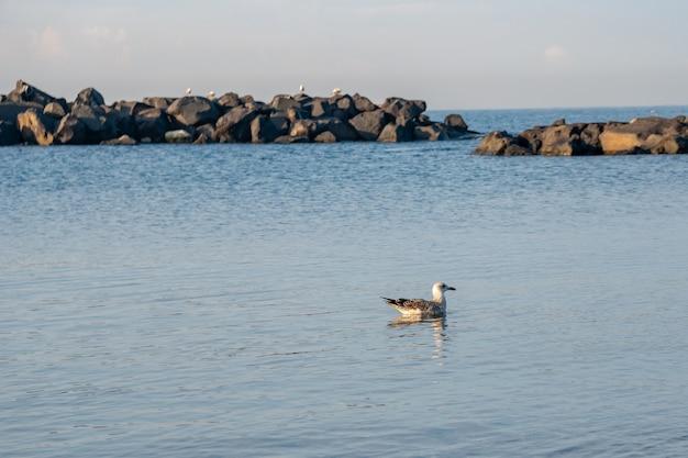 Möwe sitzt auf dem blauen meer nahe der küste.