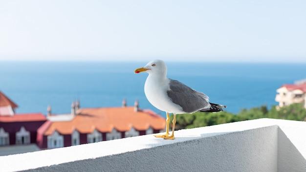 Möwe steht auf der brüstung des balkons