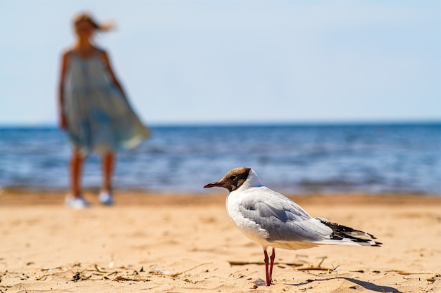 Möwe stolziert am sandstrand