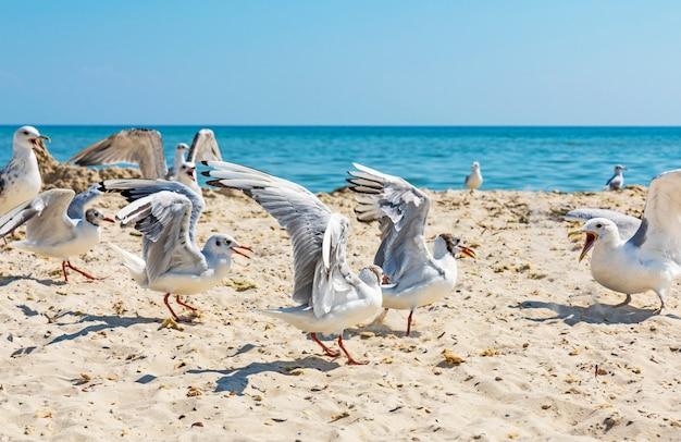Möwen am strand an einem sonnigen sommertag