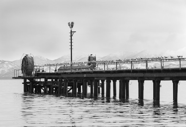 Möwen auf dem pier am ufer und nebel.