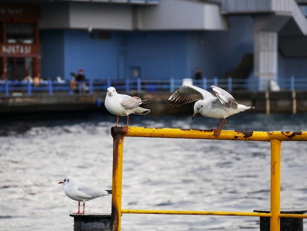 Möwen auf dem pier in istanbul-türkei