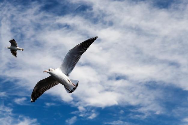 Möwen auf der suche nach nahrung an der ostsee wildvögel auf der suche nach nahrung im sommer