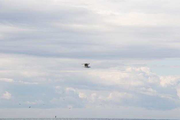 Möwen fliegen am strand im schwarzen meer, georgia