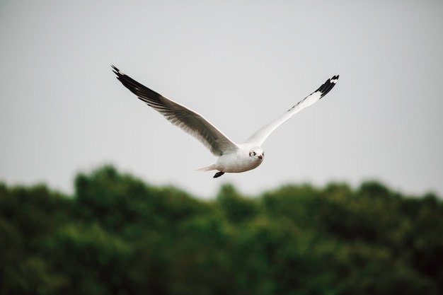 Möwen fliegen hoch mit weit ausgebreiteten flügeln in richtung licht vor blauem himmel, inspirierendes konzept von freiheit und aspiration
