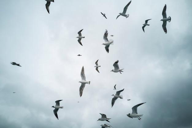 Möwen fliegen in den himmel