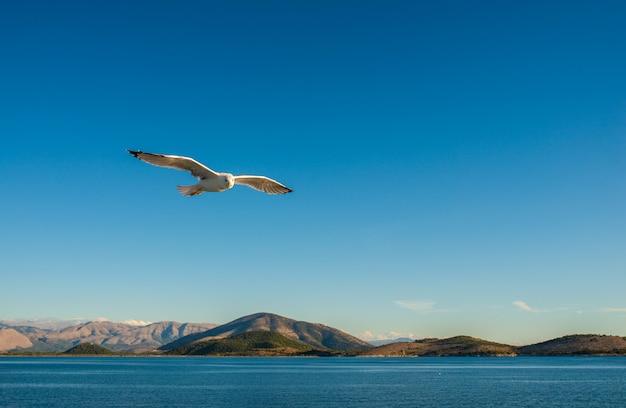 Möwen fliegen über dem ionischen meer.