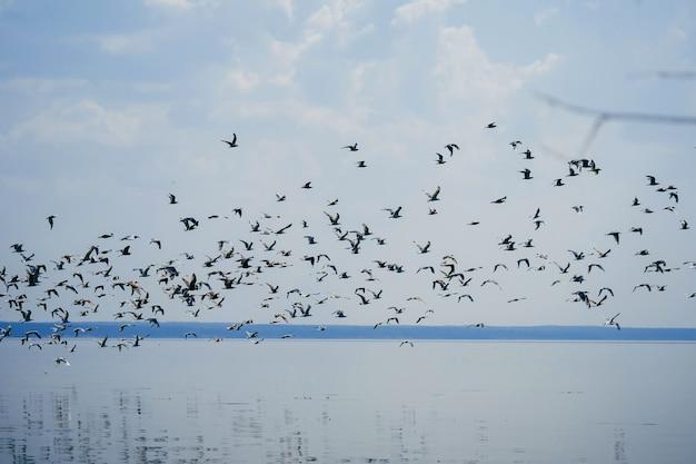 Möwen fliegen über den see