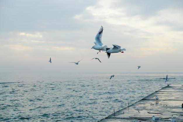 Möwen fliegen über pier