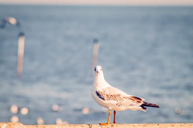 Möwenflug, seevogel fliegt durch blauen himmel blaues meer weiß hellen ton