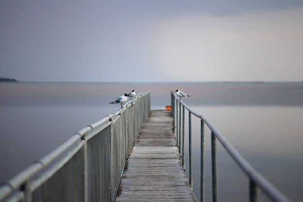 Möwenporträt gegen seeufer. nahaufnahme der weißen vogelmöwe, die am strand sitzt. wilde möwe mit natürlichem grauem hintergrund.