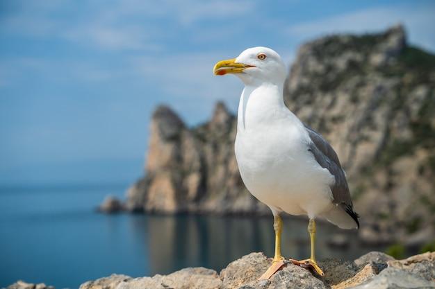 Möwenporträt gegen seeufer. nahaufnahme des weißen vogels möwe sitzen am strand. wilde möwe mit natürlichem blauem hintergrund.