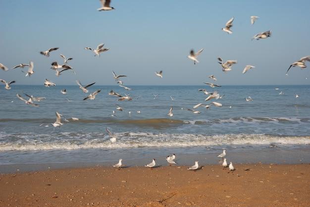 Möwenschwarm am strand