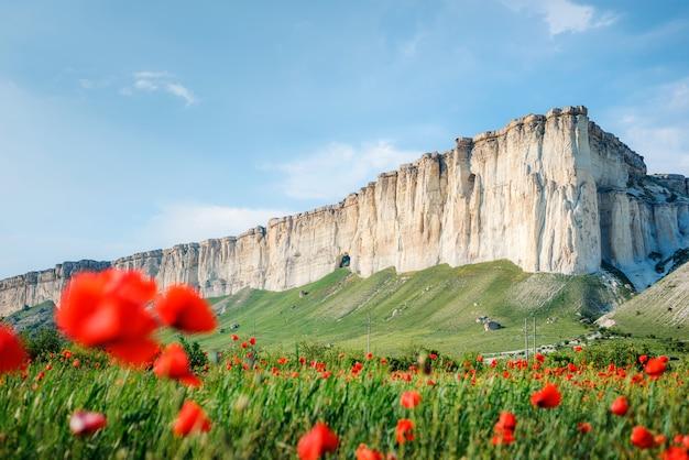 Mohnfeld vor dem hintergrund der felsigen berge, belaya skala, belogorsk, krim