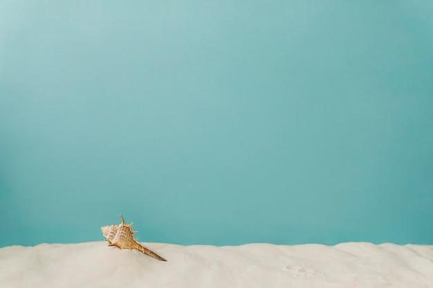 Mollusk auf sand auf blauem hintergrund