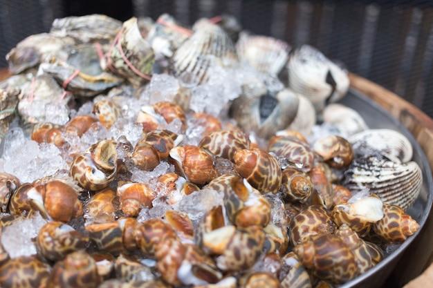 Molluske mit eis für frischen aufschlag, um meeresfrüchte zu machen