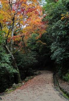 Momijidani park trail in der herbstsaison, miyajima, japan