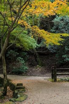 Momijidani-parkspur in der herbstsaison, miyajima, japan