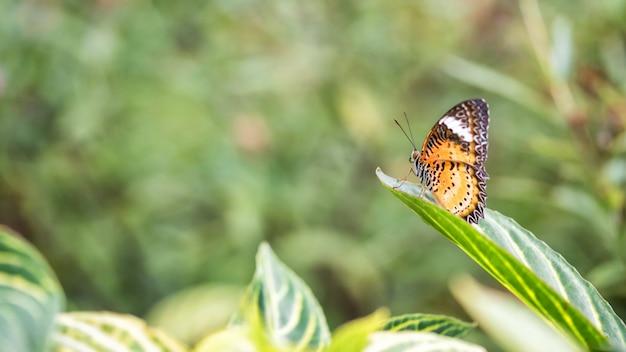 Monarch- oder vizekönigschmetterling mit naturhintergrund