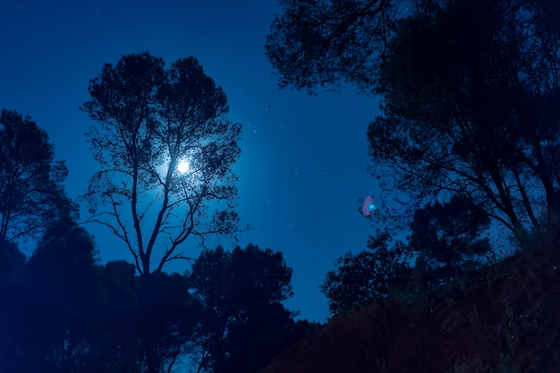 Mondschein hinter einem hohen baum