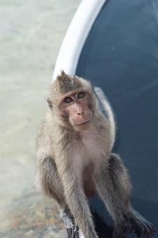 Monkey island, thailand die affen sitzen auf dem boot am bach