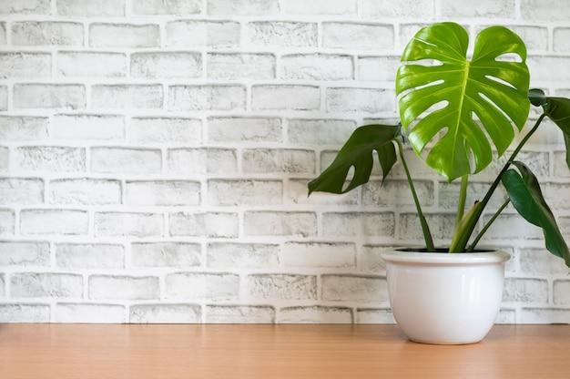 Monstera baumtopf auf holztisch mit weißem backsteinmauerhintergrund