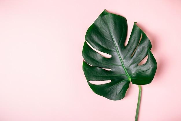 Monstera blatt auf einem rosa tisch. sommer exotisches minimalistisches blatt.