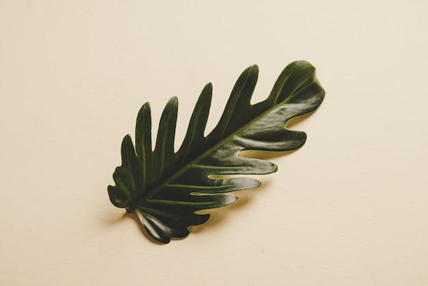 Monstera-blatt in braunem tisch, minimaler stil