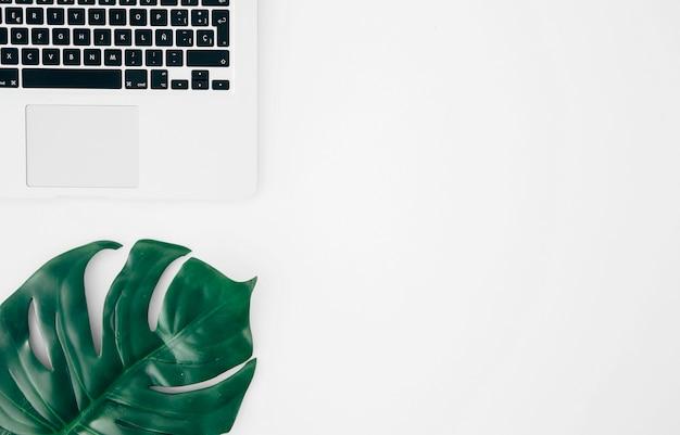 Monstera-blatt oder schweizer käseblatt nahe dem laptop gegen weißen hintergrund