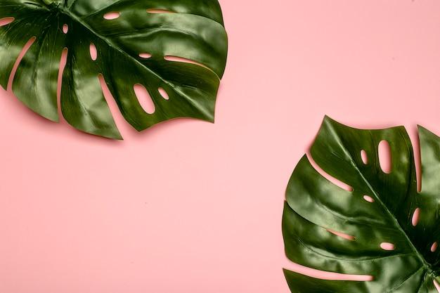 Monstera blatthintergrund. tropische dschungelpalmenblätter auf farbigem pastellhintergrund. speicherplatz kopieren