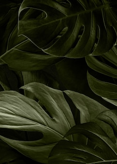 Monstera grüne natur hintergrundtapete