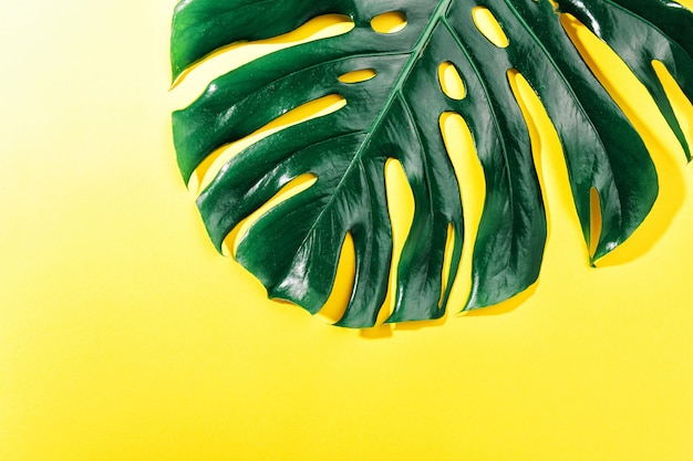 Monstera grünes blatt auf gelb