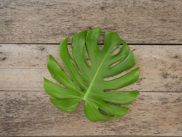 Monstera-pflanzenblätter, tropische immergrüne reben lokalisiert auf dem alten hölzernen hintergrund, draufsicht