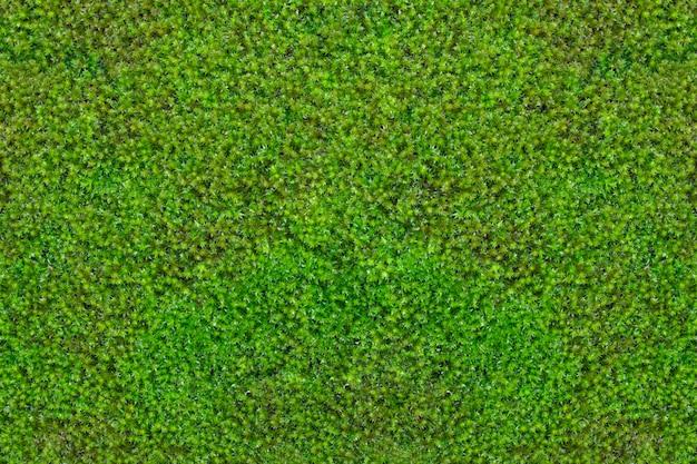 Moos textur hintergrund