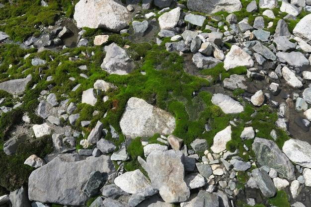 Moosbedeckte felsen. schöner mit moos und flechten bedeckter stein. hintergrund in der natur gemasert