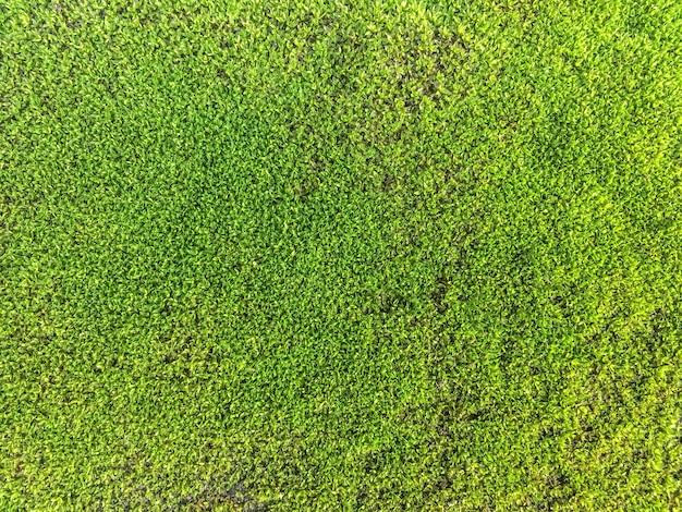 Moosbeschaffenheitsabschluß herauf grünen hintergrund