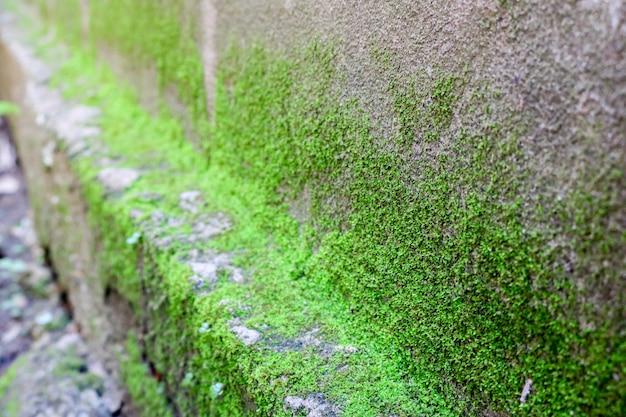 Moosgrün textur. moos hintergrund. grünes moos auf schmutzbeschaffenheit, hintergrund