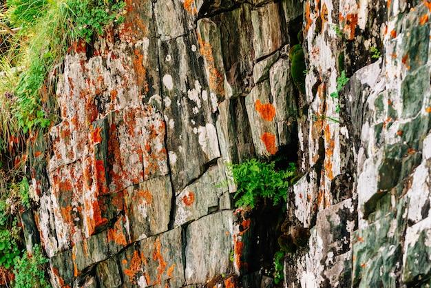 Moosige orange felsige überlagerte oberfläche des berges mit reichen vegetationen von hochländern. pflanzen, moose und flechten auf einer klippe. ausführliche beschaffenheit des bergabhangs mit copyspace. strukturierter felsen mit dem grün.